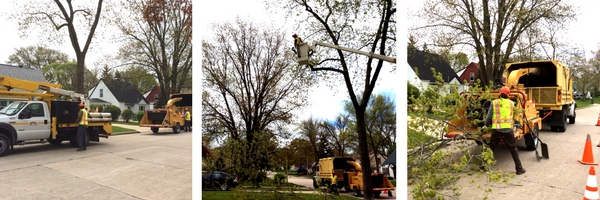tree pruning west allis