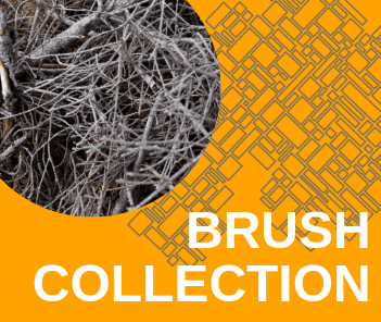 Brush Collection 2019 Graphic Showing Photo of Branches and text &#34Brush Collection&#34
